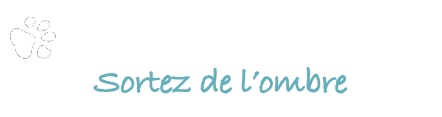 Whitewolf Agency agence web