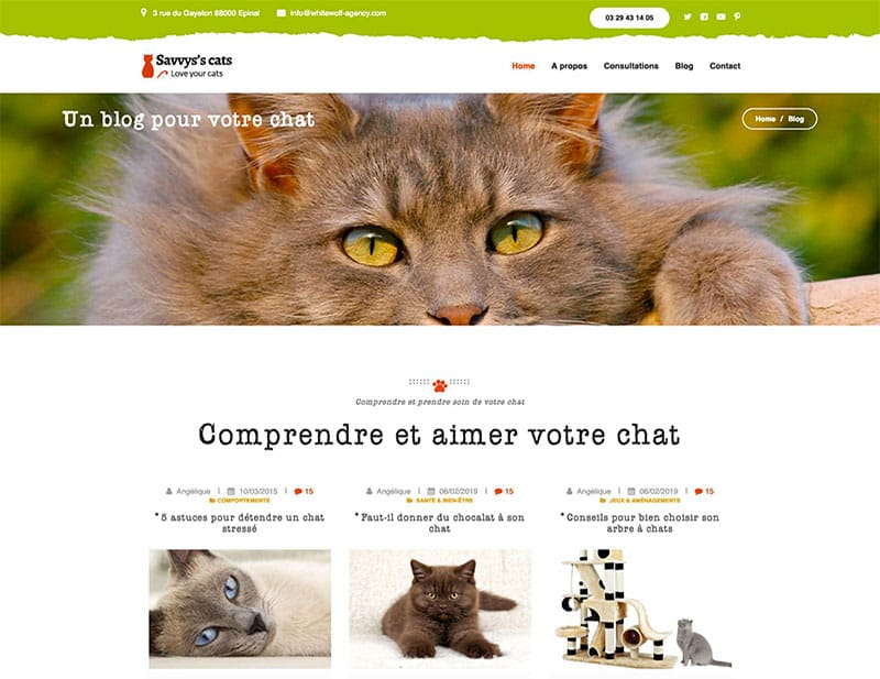 blog site internet animaux comportementaliste chats chiens
